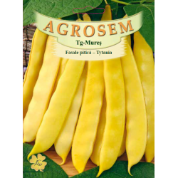 Seminte de Fasole pitica Tytania - BigPack - AS - Phaseolus vulgaris var. nanus