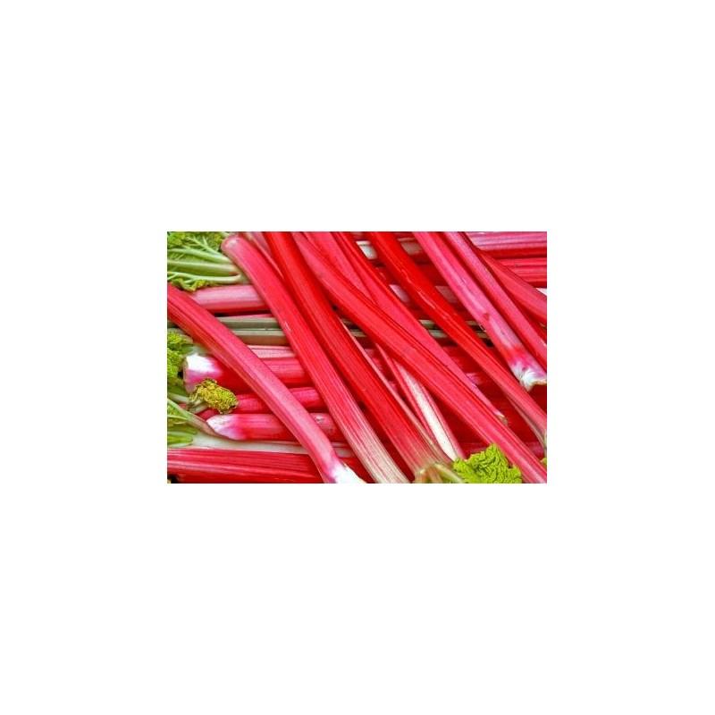 Rheum officinalis - rebarbar (revent)