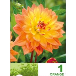 Dalia decorative Border bulb Orange - 1 bulb