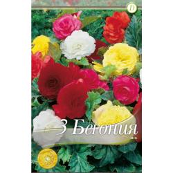 Begonia double mix - 3 bulbi