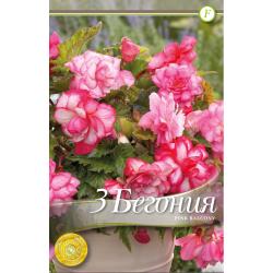 Begonia bulbi Pink Balcony