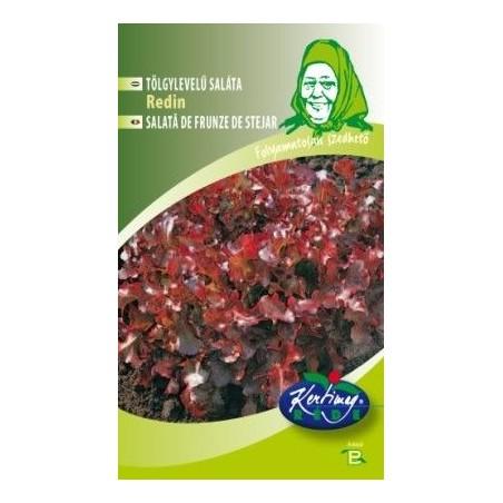Seminte de Salata Redin - GB - Lactuca sativa