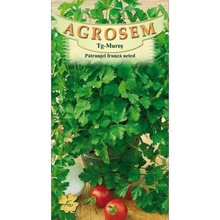 Seminte de Patrunjel frunza neted - AS - Petroselinum crispum