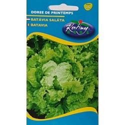 Seminte de Salata Batavia Doree de Printemps - KM - Lactuca sativa