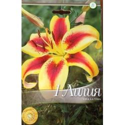 Lilium asiatic Viva la Vida - 1 bulb