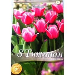 Tulipa Capri Dream - 8 bulbi
