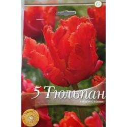 Tulipa Amazing Parrot - 8 bulbi