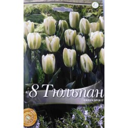 Tulipa Green Spirit - 8 bulbi