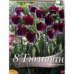Tulipa Kansas Proud - 8 bulbi