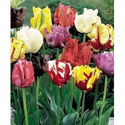 Tulipa Parrot mix - 8 bulbi