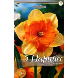 Narcissus Mondragon - 5 bulbi AS