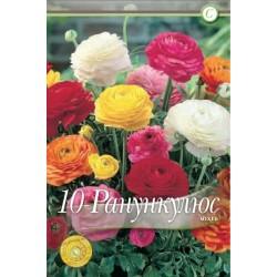 Ranunculus mix 10 bulbi