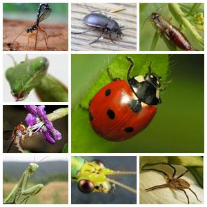 Gradinaritul Bio incepe cu atragerea insectelor utile.