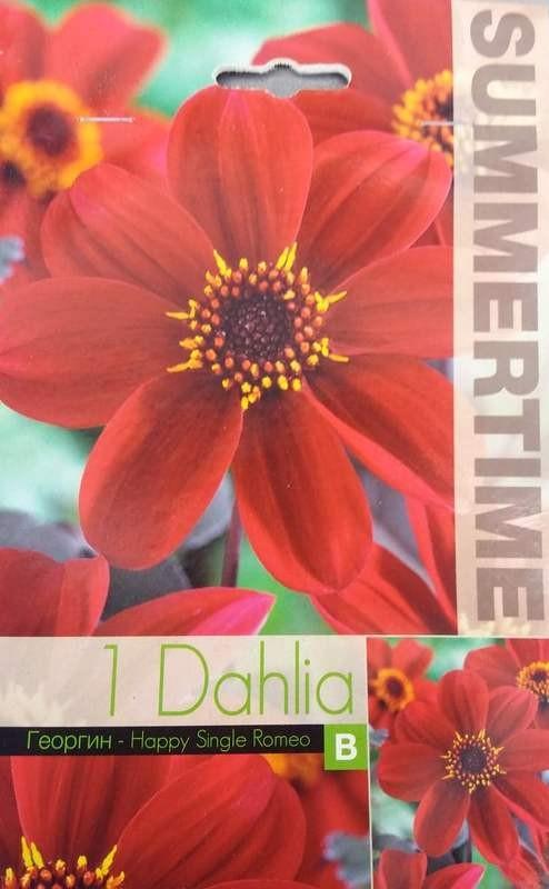 Dahlia Various Happy Single Romeo- 1 bulb