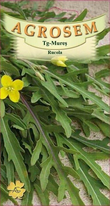 Seminte de Rucola Bigpack 20g - AS - Eruca sativa