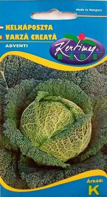 Seminte de Varza creata Adventi - KM - Brassica oleracea convar bullata