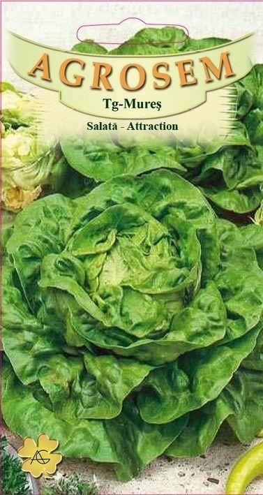 Seminte de Salata Attraction - AS - Lactuca sativa