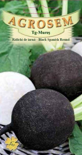 Seminte de Ridichi de iarna Black Spanish Round - 200g - AS - Raphanus sativus var. niger