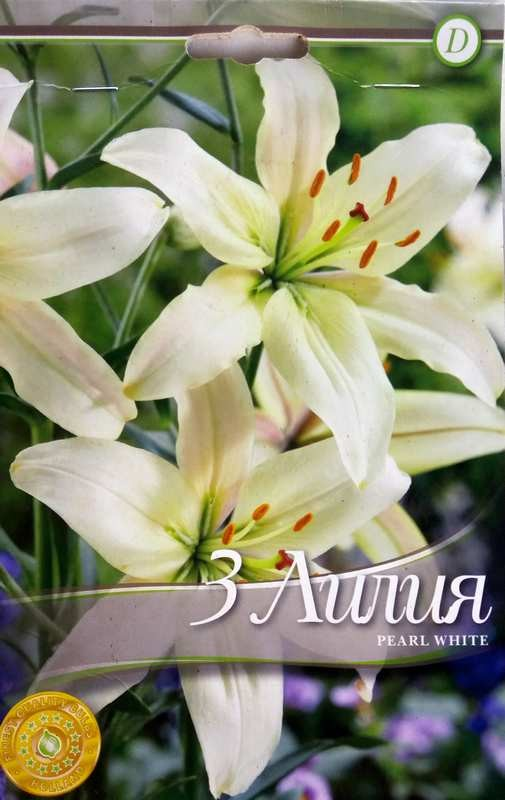 Bulbi de crini - Lilium asiatic Pearl White - 3 bulbi