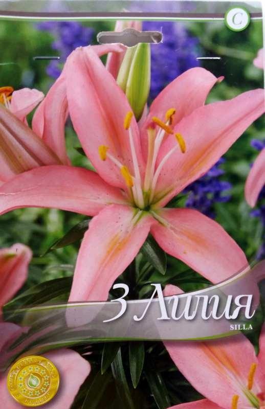 Bulbi de crini - Lilium asiatic Silla - 3 bulbi