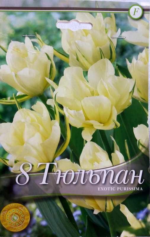 Bulbi de lalele Exotic Purissima - 8 bulbi