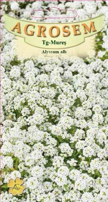 Seminte de Alyssum alb - AS - Lobularia maritima