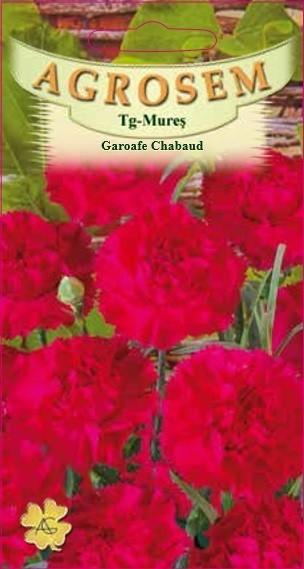 Seminte de Garoafe Chabaud rosu - AS - Dianthus caryophyllus