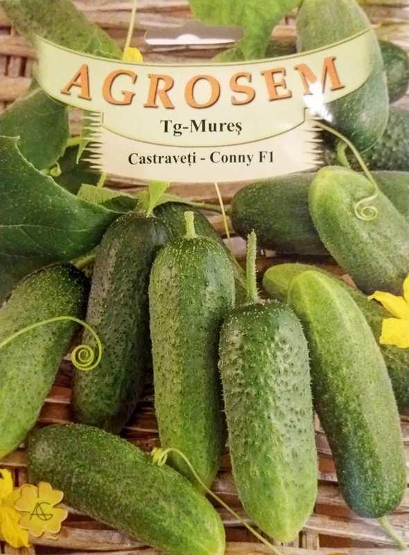 Seminte de Castraveti cornichon Conny F1 - AS - Cucumis sativus