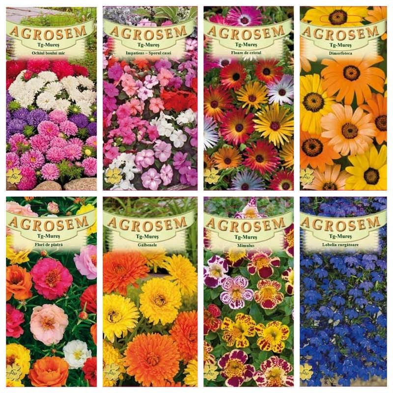 Pachet pentru balcon - seminte de flori pitice si urcatoare - 25 plicuri
