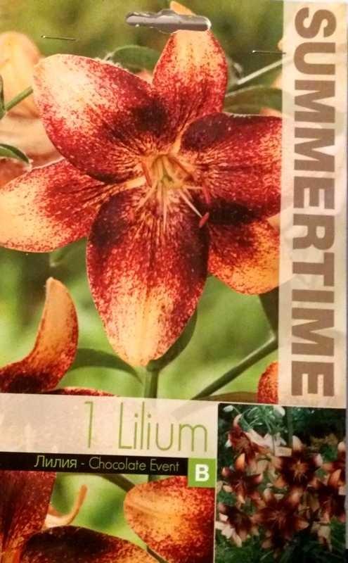 Bulbi de crini - Lilium asiatic Chocolate Event - 1 bulb