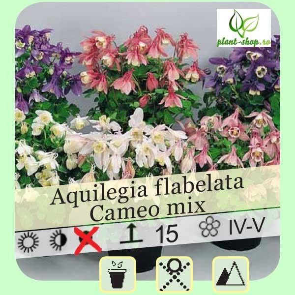 Aquilegia flabellata Cameo mix G-9