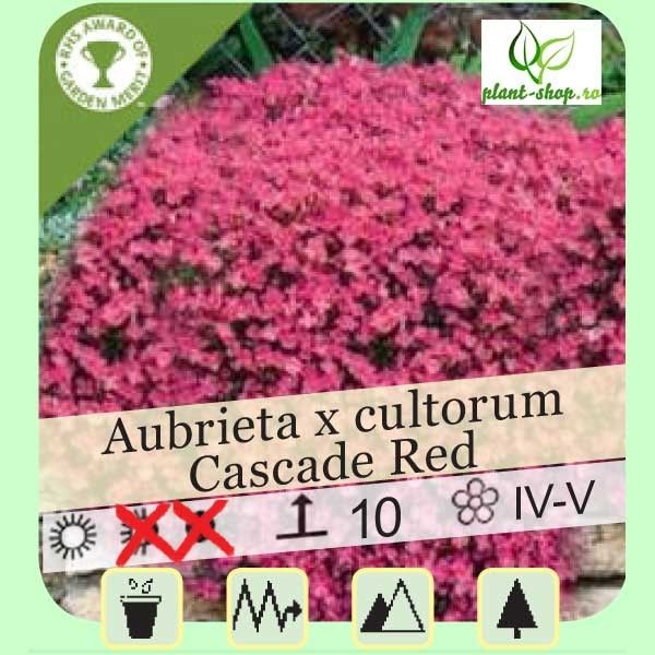 Aubrieta x cultorum Cascade Red G-9