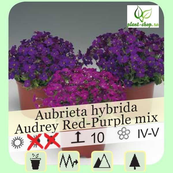 Aubrieta x hybrida Audrey F1 Red-Purple mix G-9
