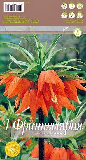 Bulbi de Fritillaria imperialis Aurora