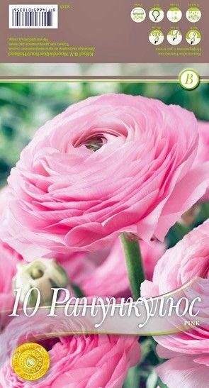 Ranunculus Pink - 10 bulbi