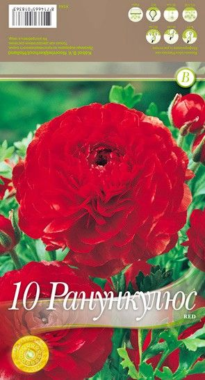 Ranunculus Red - 10 bulbi