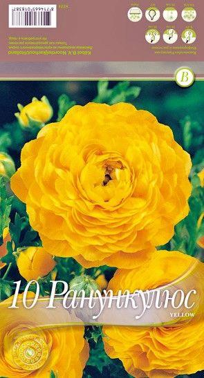 Bulbi de Ranunculus Yellow - 10 bulbi
