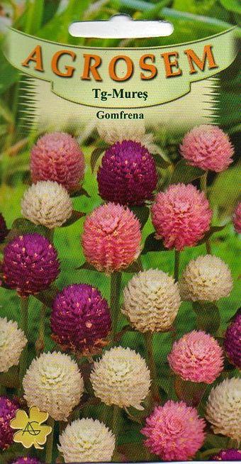 Seminte de Gomfrena mix - AS - Gomphrena globosa