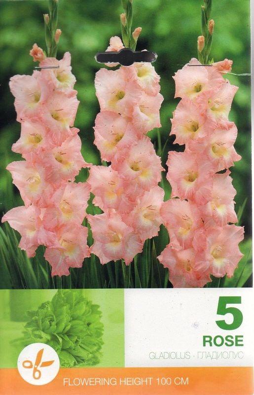 Gladiole bulbi Rose - 5 bulbi