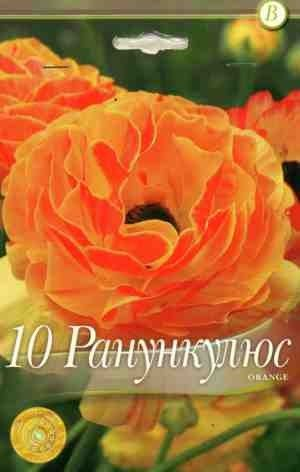 Ranunculus Orange - 10 bulbi