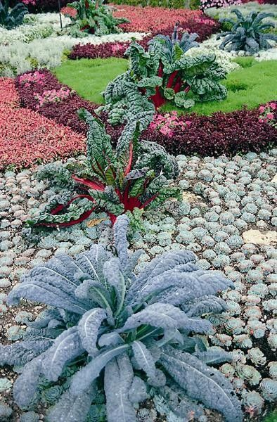 Seminte Brassica oleracea Nero di Toscana