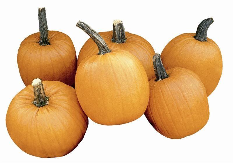 Seminte Dovleac de Halloween - Cucurbita pepo Tom Fox
