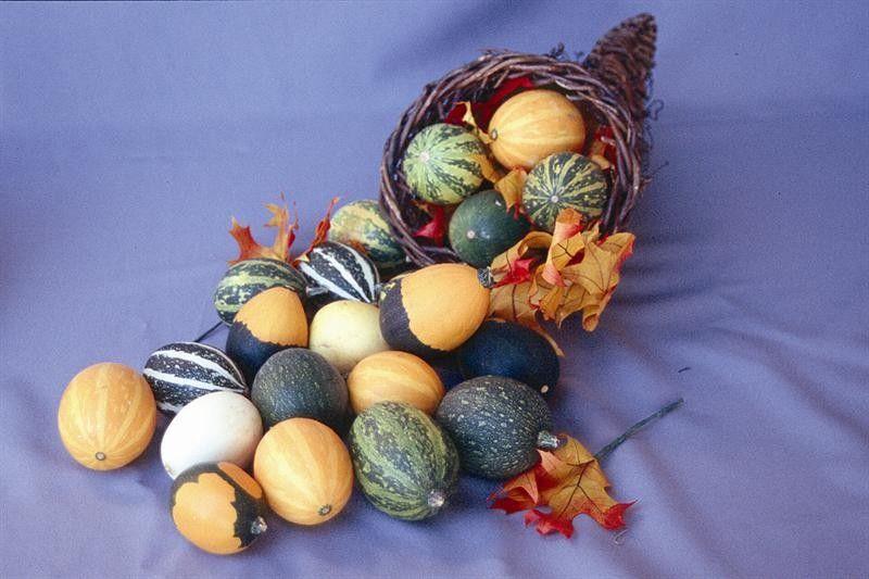 Seminte Dovleac - Cucurbita pepo Goblin Eggs