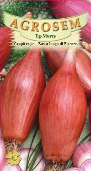 Seminte de Ceapa rosie Rossa lunga di Firenze - AS - Allium cepa