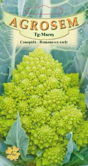 Seminte de Conopida verde Romanesco Early - AS - Brassica oleracea var. botrytis