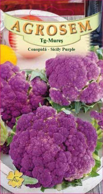 Seminte de Conopida mov Sicily Purple - AS - Brassica oleracea var. botrytis