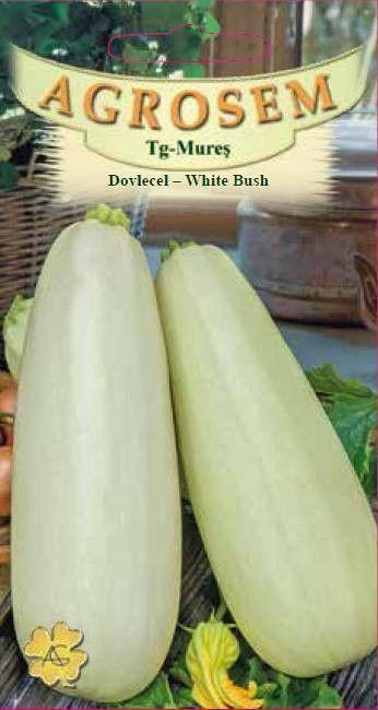 Seminte de Dovlecel White Bush - AS - Cucurbita pepo var. giromontia