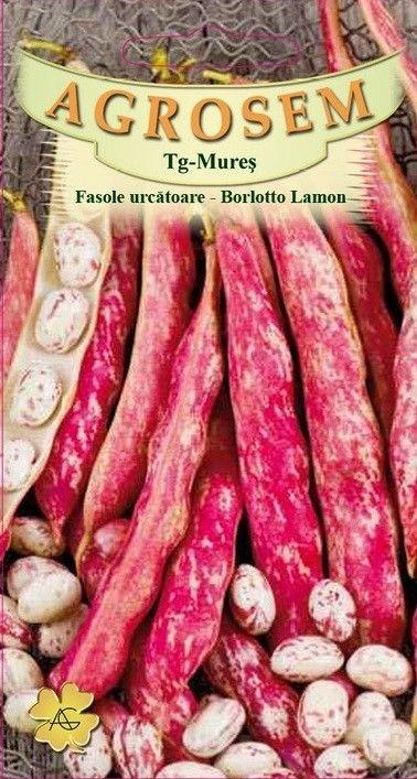 Seminte de Fasole urcatoare Borlotto Lamon - AS - Phaseolus vulgaris var. vulgaris