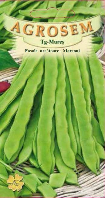 Seminte de Fasole urcatoare Marconi - AS - Phaseolus vulgaris var. vulgaris