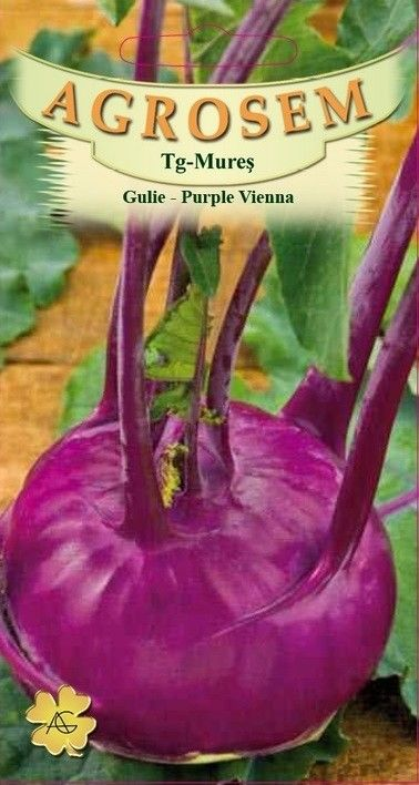 Seminte de Gulie Vienna Purple - AS - Brassica oleracea var. gongylodes